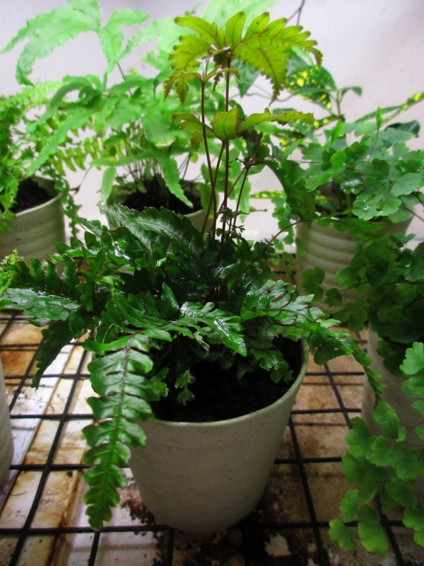 植物「花菖蒲の咲く頃」_b0362459_22424091.jpg