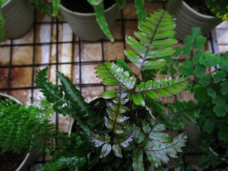植物「花菖蒲の咲く頃」_b0362459_22445390.jpg