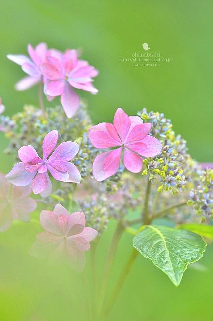 花束を_c0319774_00123815.jpg