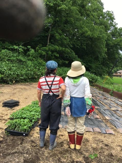 幻の赤大豆~植えました!_b0270977_11233488.jpg