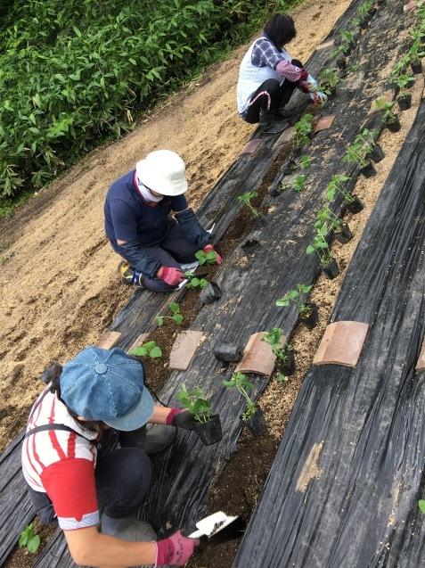 幻の赤大豆~植えました!_b0270977_11280242.jpg