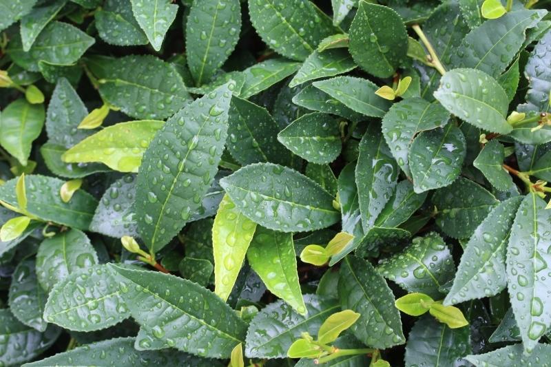 茶LON (66)_b0220318_18242017.jpg
