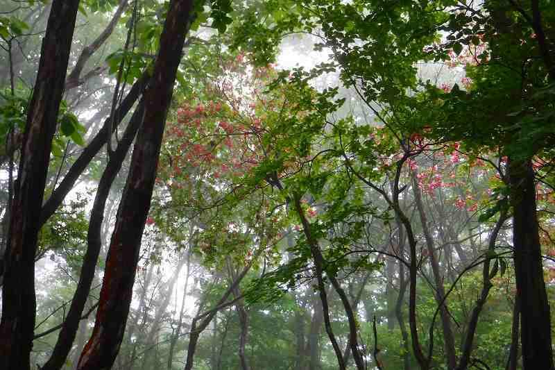 小雨の横根山 縦走。_d0000031_16305039.jpg