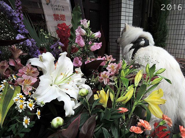 毛玉の女神さま_c0062832_14122333.jpg