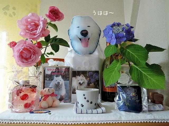 毛玉の女神さま_c0062832_14124119.jpg
