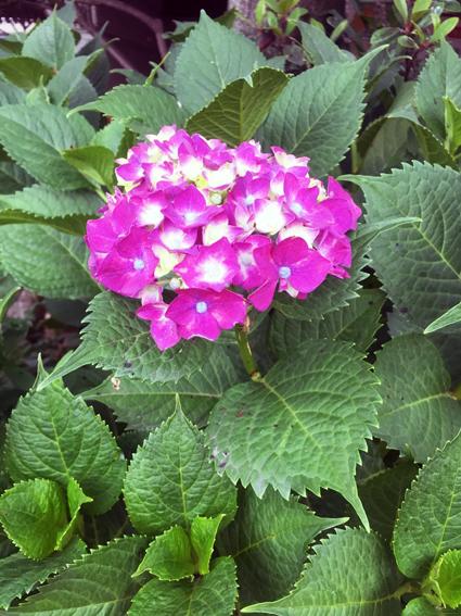 初夏の花_f0045132_12225014.jpg