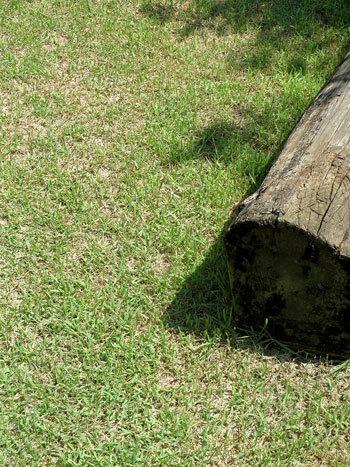 今年最初の芝刈り_d0130640_08264709.jpg