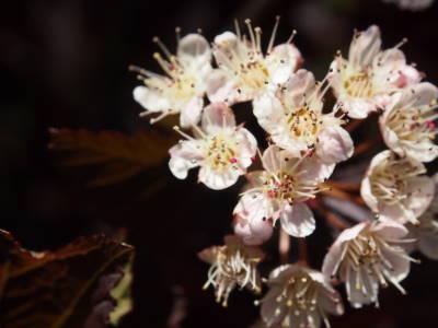 枝の花_a0129867_16265099.jpg