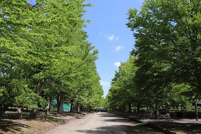 弘前城植物園_2019.06.12_d0131668_17232669.jpg