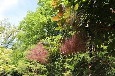 弘前城植物園_2019.06.12_d0131668_17235373.jpg