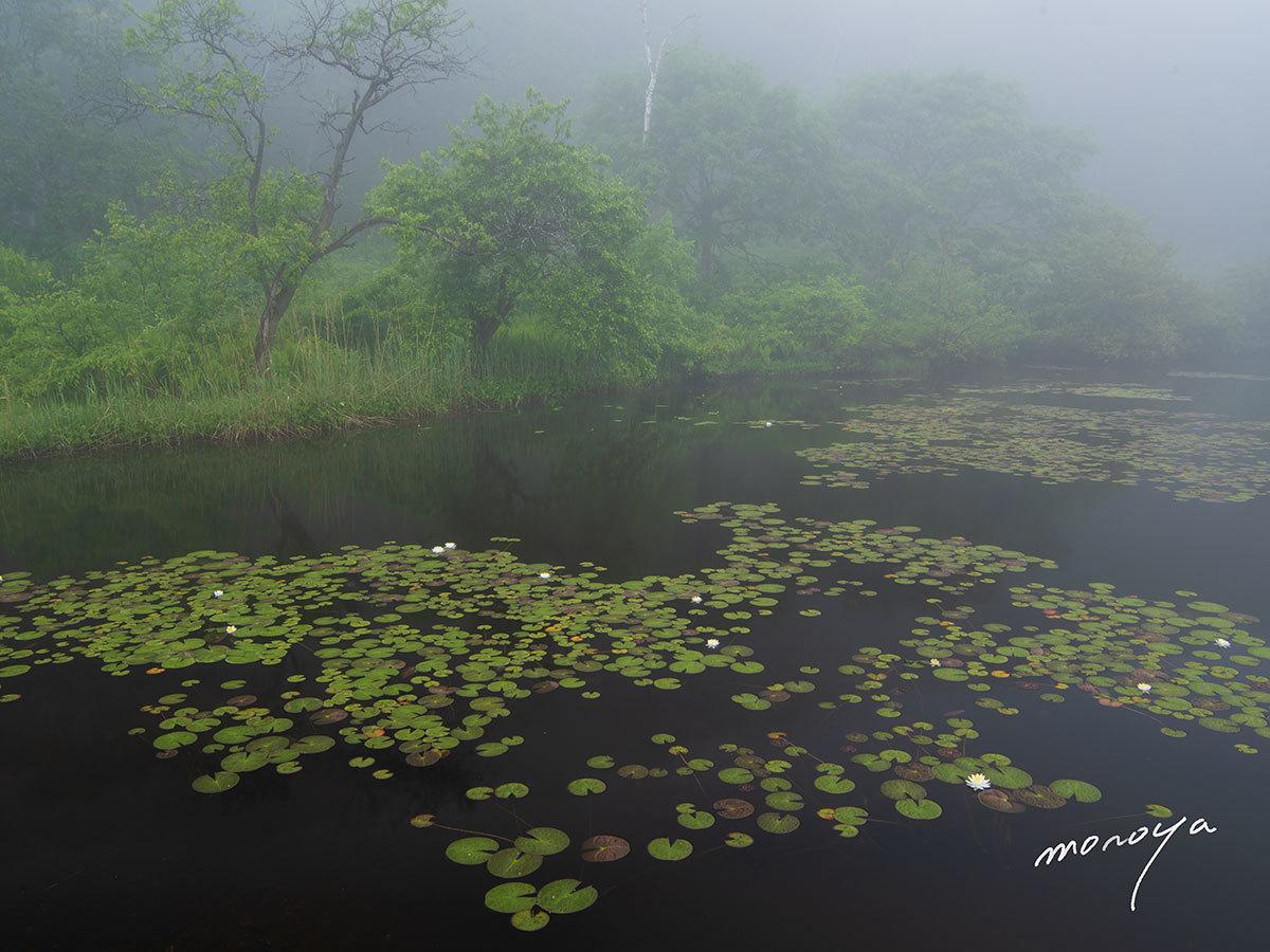 霧の沼_c0085877_05312295.jpg