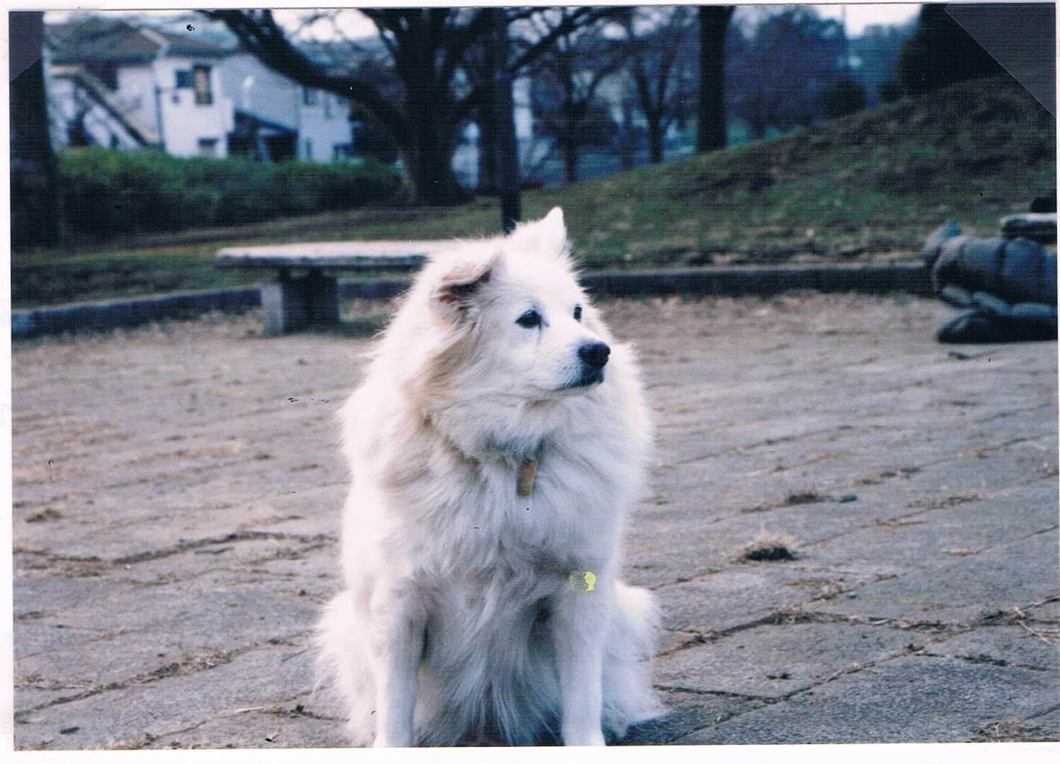 犬の子広場_e0232277_10563327.jpg