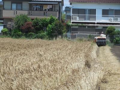 小麦収穫_c0332682_22055291.jpg