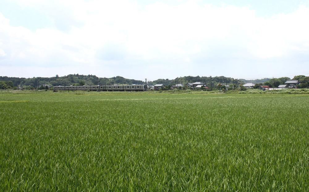 緑のじゅうたんを走るJR東金線_b0114798_16080423.jpg