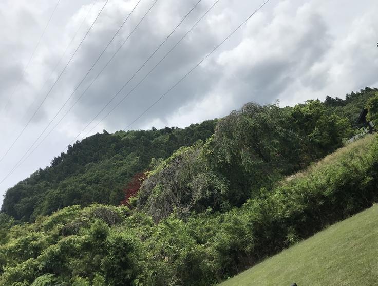 午後は曇り、明日は雨か…@宮ヶ瀬_c0212604_11581497.jpg