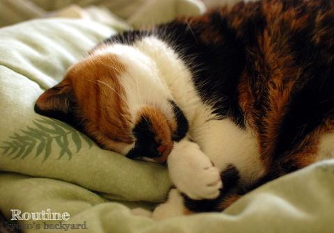 猫と下僕のルーティン_b0253205_05503409.jpg