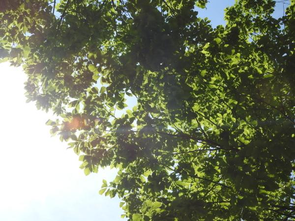 今週末の天気と気温(2019年6月14日):長袖必須です_b0174425_12300169.jpg