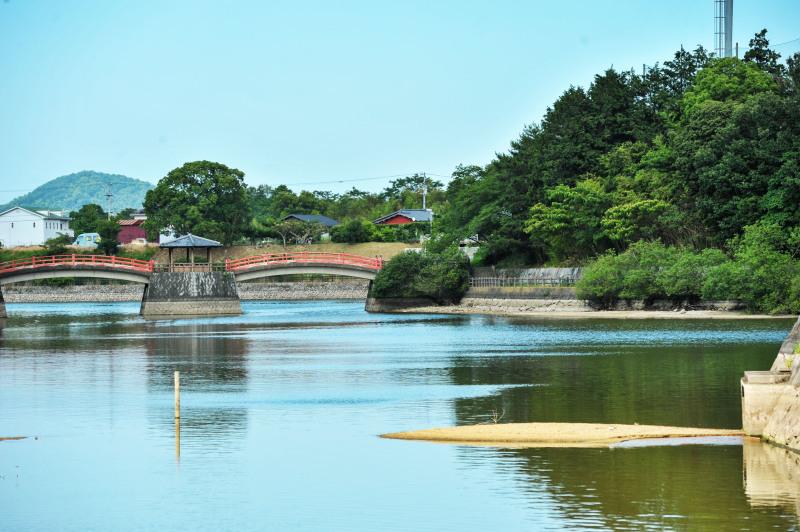 亀鶴公園 菖蒲 2019_d0246136_23392835.jpg