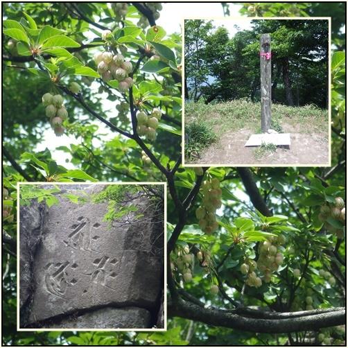 英彦山・・オオヤマレンゲ_e0164643_15581881.jpg