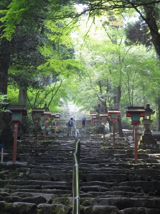 英彦山・・オオヤマレンゲ_e0164643_15584037.jpg