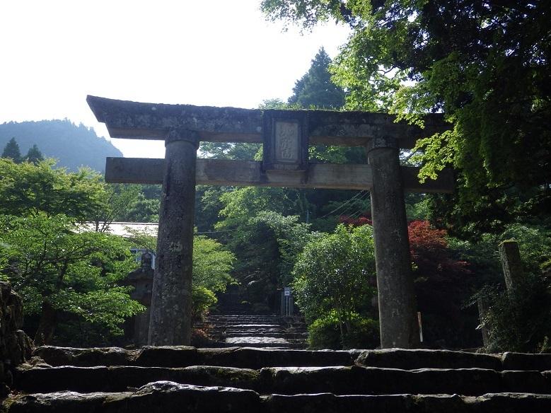 英彦山・・オオヤマレンゲ_e0164643_15584948.jpg