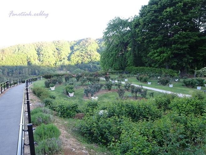 まだ緑のバラ園 お参り_d0356844_10425474.jpg