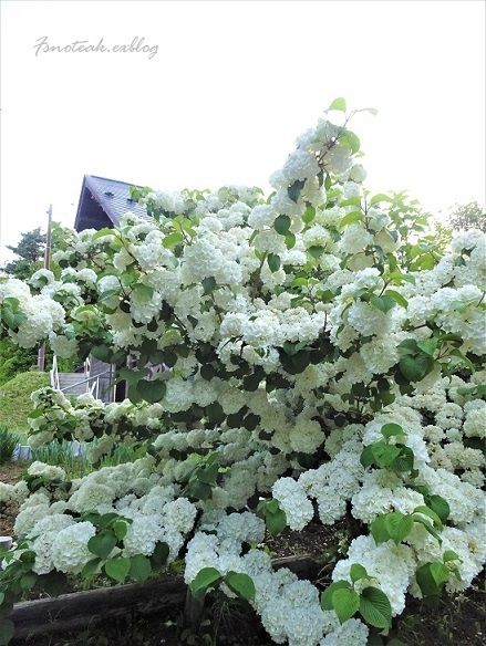 まだ緑のバラ園 お参り_d0356844_10444539.jpg