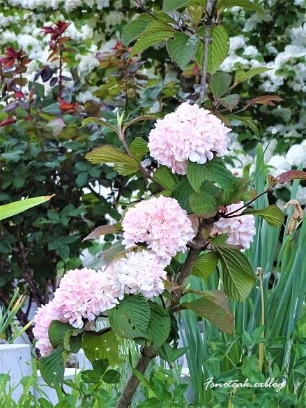 まだ緑のバラ園 お参り_d0356844_10450580.jpg