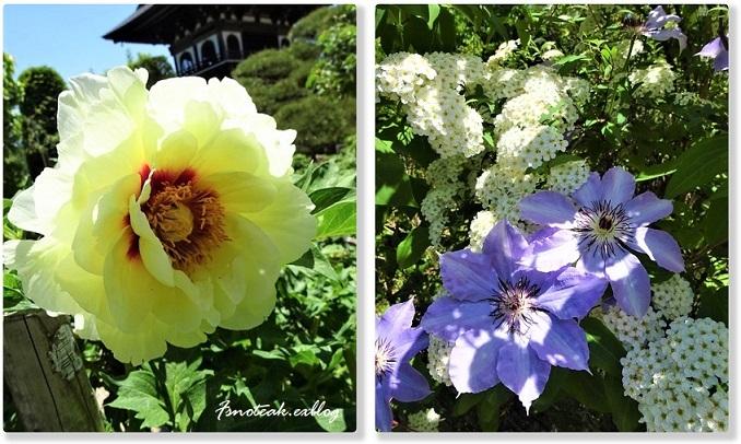 まだ緑のバラ園 お参り_d0356844_10513981.jpg