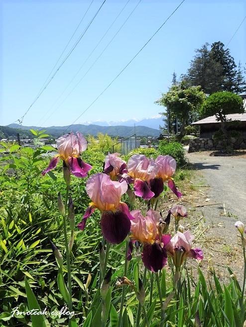 まだ緑のバラ園 お参り_d0356844_10515871.jpg