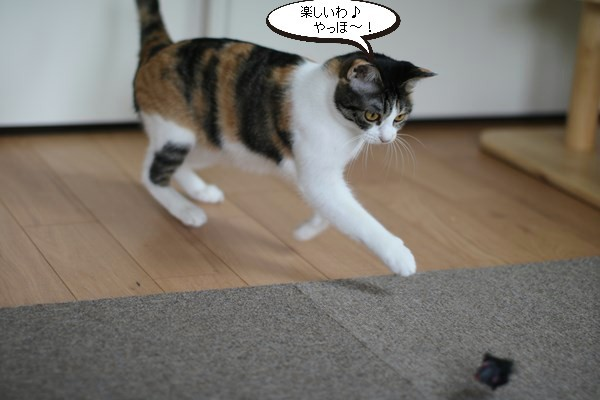 ネズミのおもちゃと里親様便り_e0151545_21231581.jpg