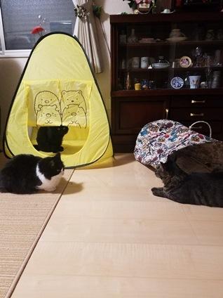 ネズミのおもちゃと里親様便り_e0151545_21243019.jpg