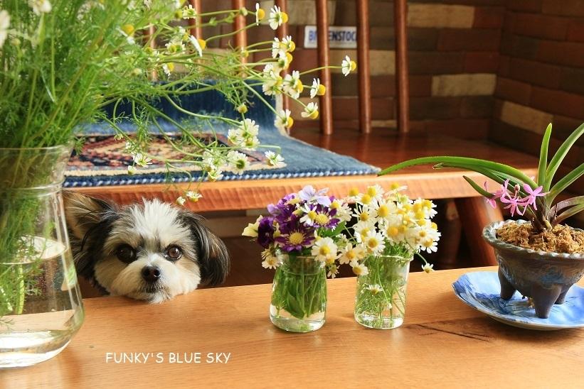 庭の小さなブーケ** (5月19日)_c0145250_10500361.jpg