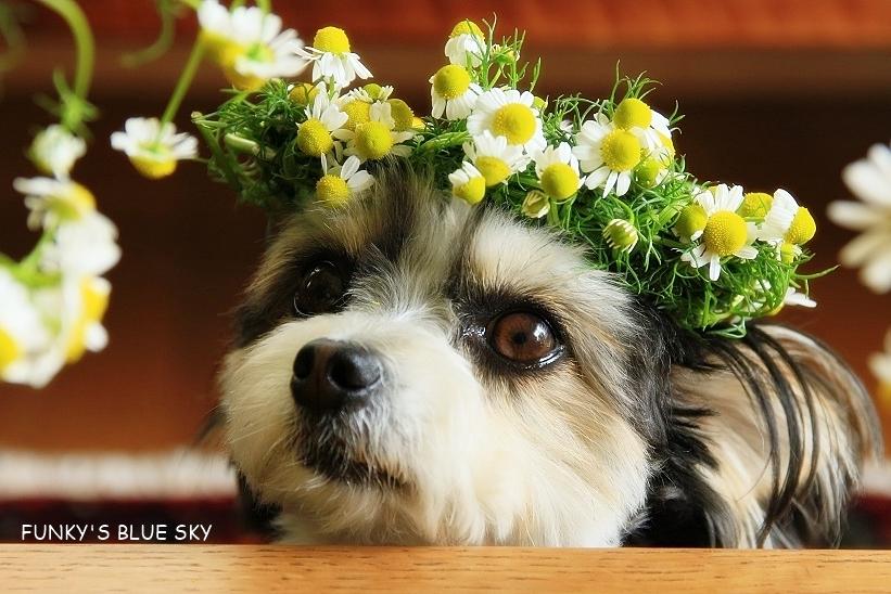 庭の小さなブーケ** (5月19日)_c0145250_10500621.jpg