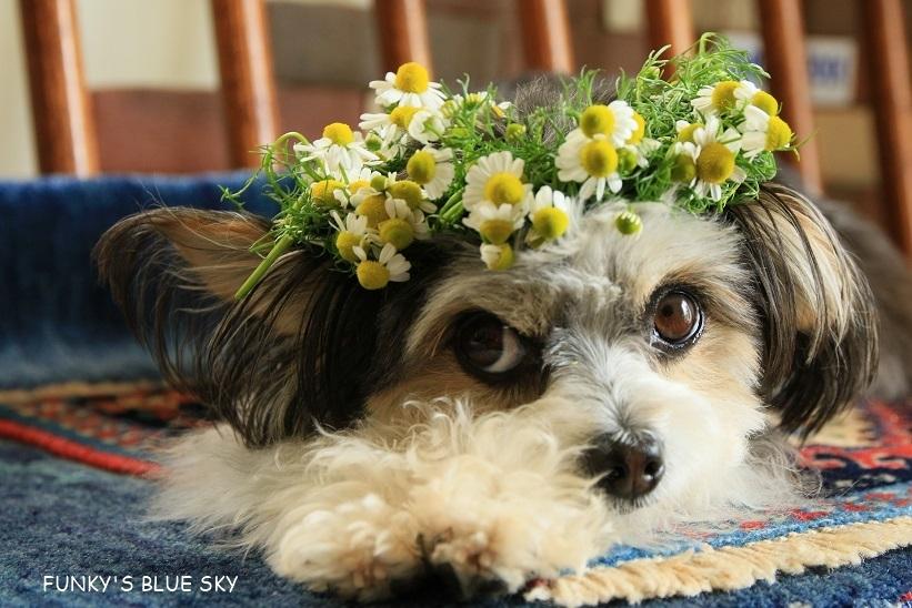 庭の小さなブーケ** (5月19日)_c0145250_10501522.jpg