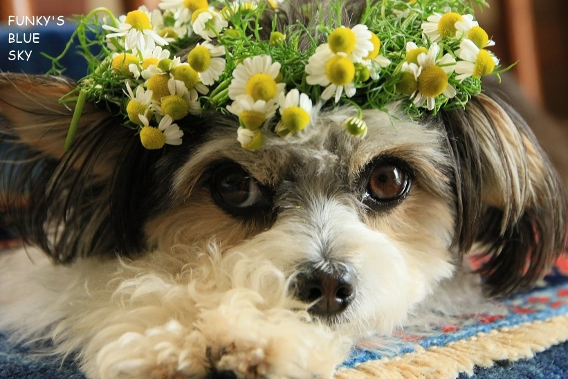 庭の小さなブーケ** (5月19日)_c0145250_10502156.jpg
