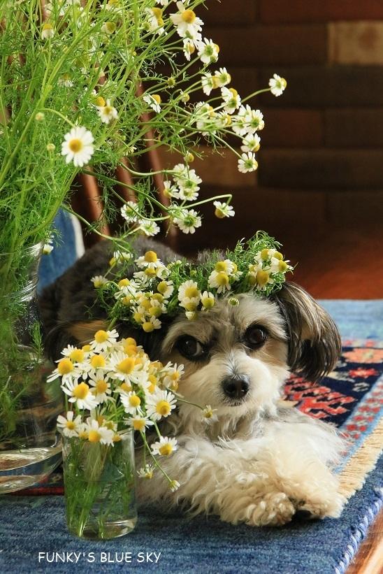 庭の小さなブーケ** (5月19日)_c0145250_10502456.jpg