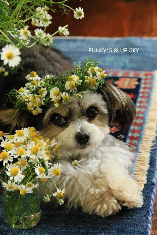 庭の小さなブーケ** (5月19日)_c0145250_10503004.jpg