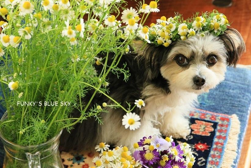 庭の小さなブーケ** (5月19日)_c0145250_10503629.jpg