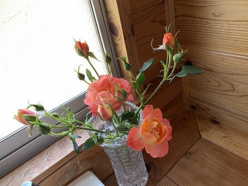 オレンジ色の薔薇_c0327752_16060040.jpg