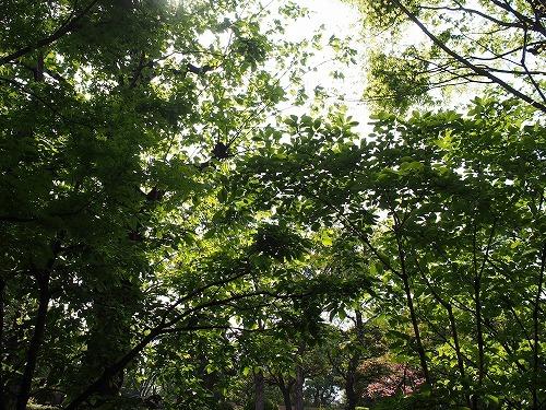 緑に囲まれて ウエスト青山ガーデンでホットケーキを_e0200073_22261550.jpg