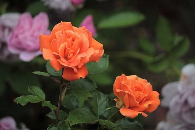 princess tango_e0369182_22460153.jpg