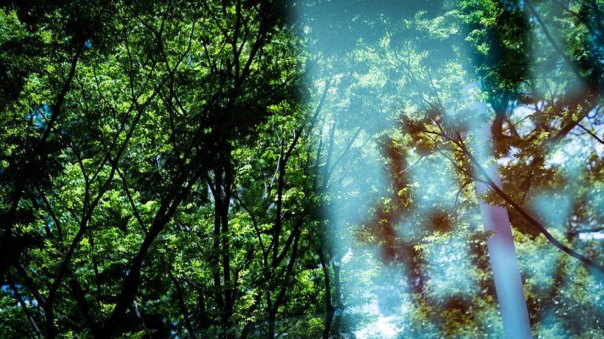 緑と戯れる光蜥蜴_d0353489_22184060.jpg