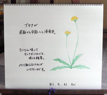 草刈りしたい!!!!_b0364195_12460333.jpg