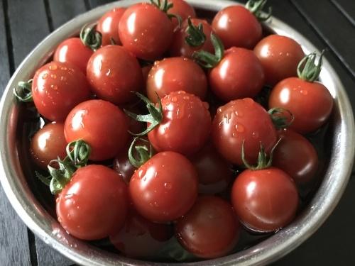 菊池家初夏のプチトマト祭りやぁ〜!_f0061797_02235360.jpg