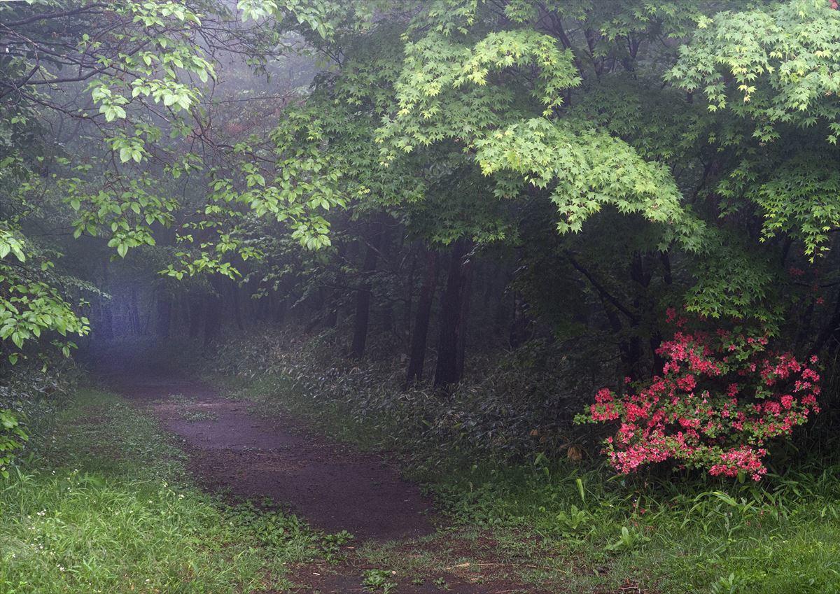 霧の森_b0074098_20145222.jpg