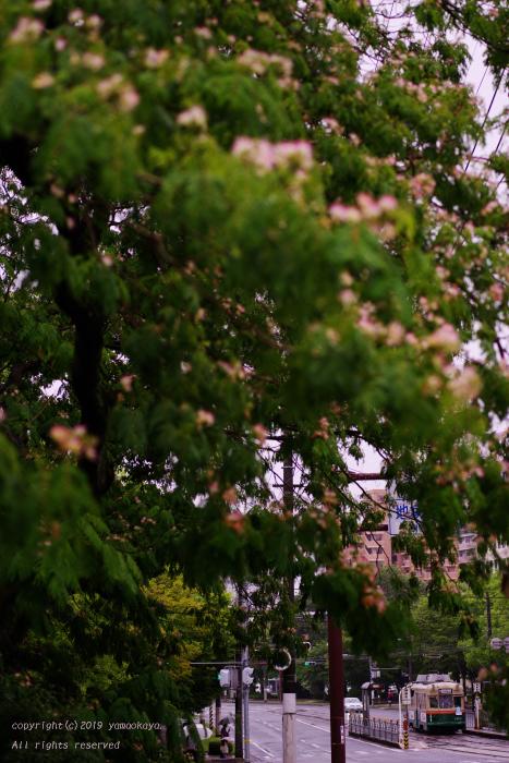 合歓の木のたもとで_d0309612_12415093.jpg