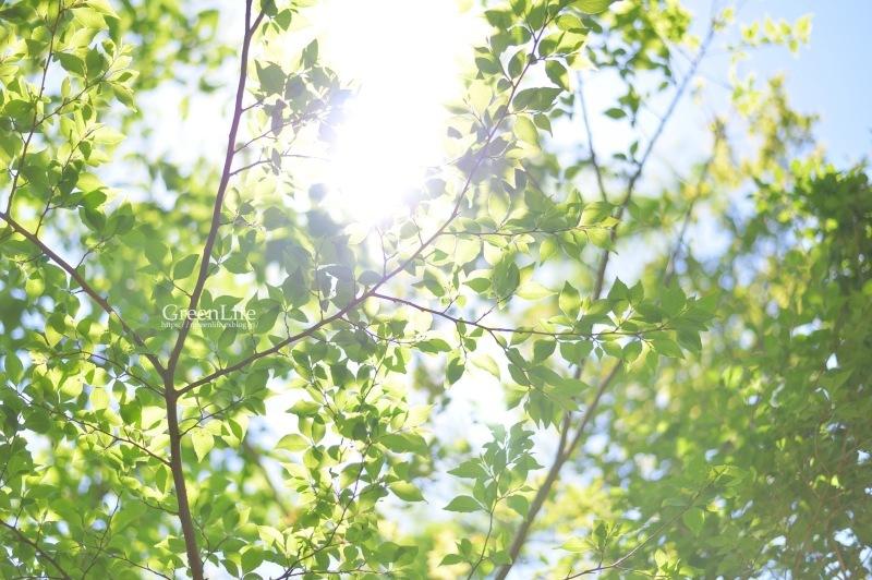 新緑の丹沢縦走_f0321522_15200680.jpg