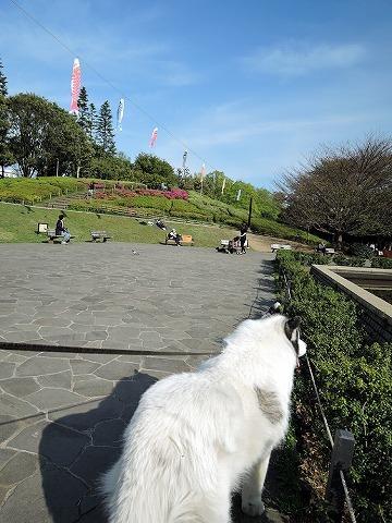 散歩屋日誌【6】_c0062832_16435675.jpg