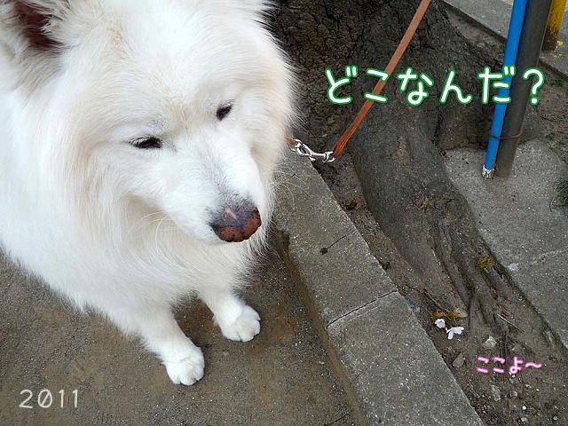 散歩屋日誌【6】_c0062832_16463443.jpg